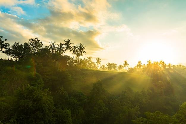 Salida del sol sobre la selva Foto gratis