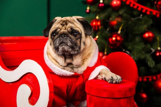 Santa pequeño ayudante perro doméstico Foto gratis