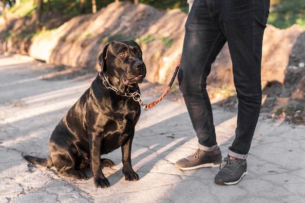 Sección baja de un hombre con su mascota. Foto gratis