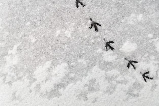 Seguimiento de las huellas de una paloma en la nieve. fondo abstracto de nieve natural. Foto Premium