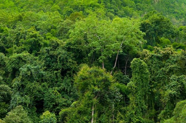 Selva tropical asiática Foto Premium