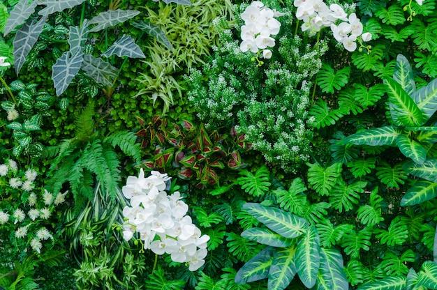 Selva Tropical Como Con Ricas Plantas Verdes Como Helechos