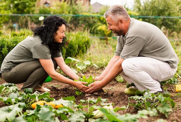 Senior pareja cuidando los cultivos Foto gratis