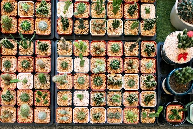 Set de decoración de colección de plantas de interior de cactus Foto gratis