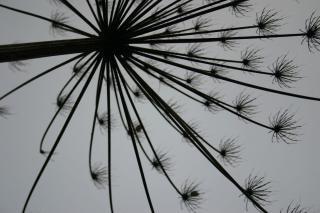 silueta de una planta, silueta Foto Gratis