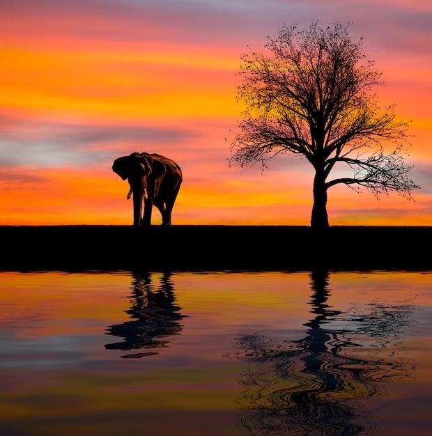 Silueta de elefante en la naturaleza Foto Premium