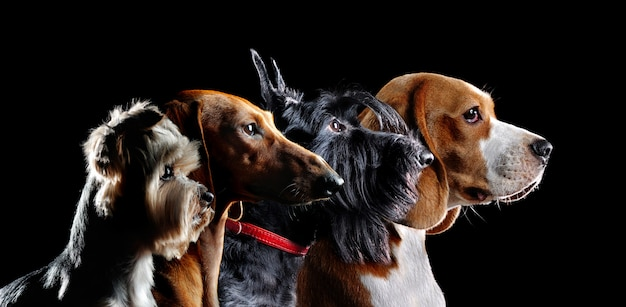 Silueta grupal de perros de diferentes razas Foto Premium