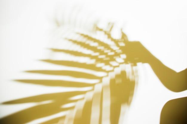 Silueta de una persona que sostiene la hoja de palma borrosa en el contexto blanco Foto gratis