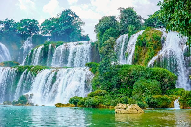 Silvestres asiáticos saigon Foto gratis