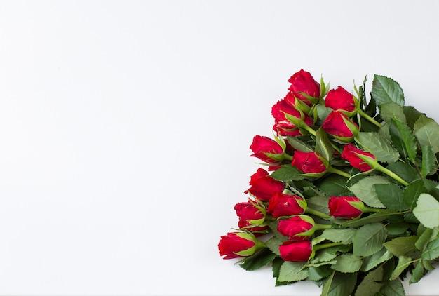 Sobre fondo blanco rosas rojas - fondo festivo Foto Premium