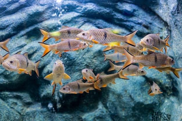 Sobre peces de mar y peces de agua dulce en acuario Foto Premium