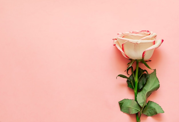 Sola flor color de rosa en fondo rosado con el lugar para el texto Foto Premium