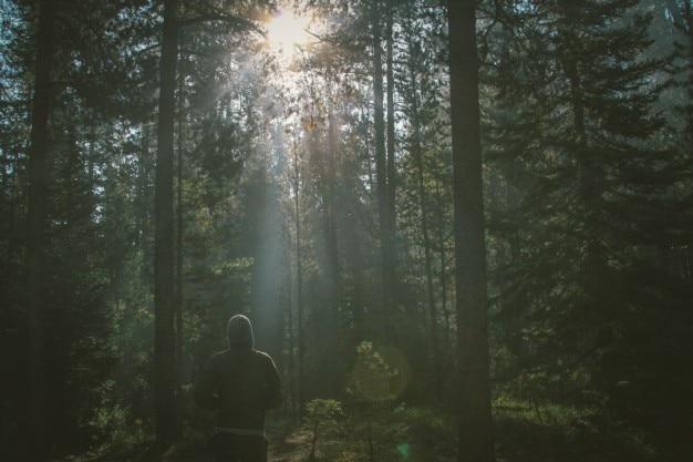 Solitario caminante en el bosque Foto Gratis
