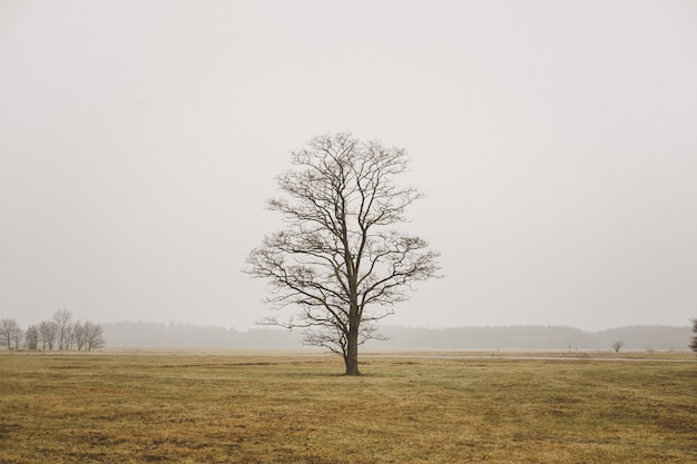 Un solo árbol solitario en un campo en campo brumoso y cielo gris Foto gratis