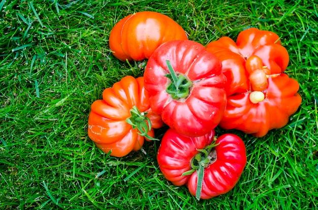 Solo arrancó tomates de filete de res sobre hierba verde. Foto Premium