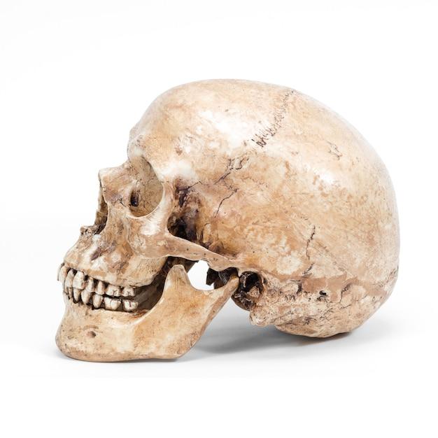 Solo cráneo humano aislado en el fondo blanco Foto Premium