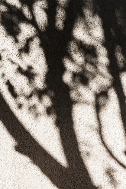 Sombra de un árbol en la pared Foto gratis