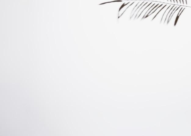 Sombra de la hoja aislada en el fondo blanco con el espacio para escribir el texto Foto gratis