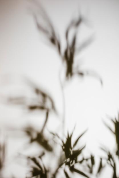 Sombra de hojas borrosas sobre fondo blanco Foto gratis