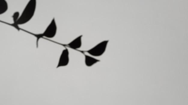 Sombra de rama de hoja sobre un fondo gris Foto gratis