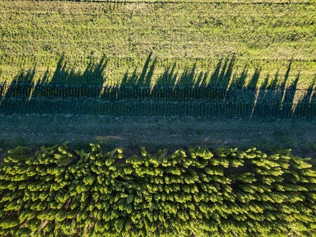 Sombras de vista aérea en el suelo de árboles jóvenes, una plantación plantada con árboles. Foto Premium
