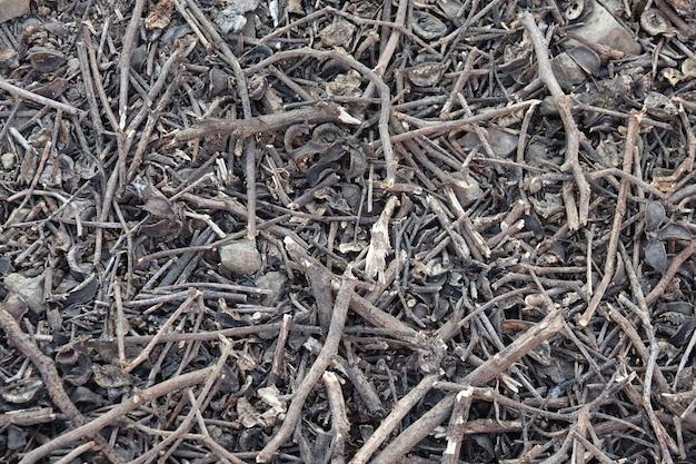 Suelo con ramas de árboles secas | Descargar Fotos gratis