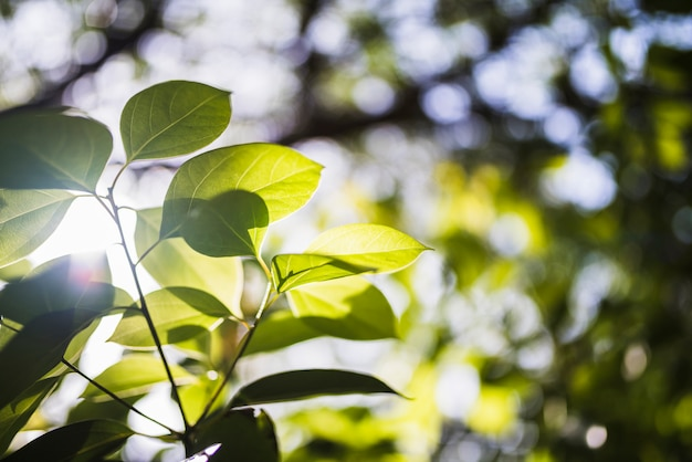 Sunflare en hojas verdes en la naturaleza Foto gratis