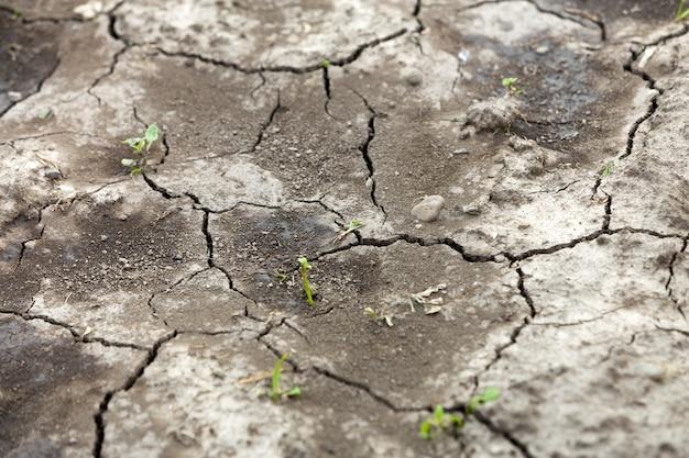 Superficie plana de tierra seca agrietada, textura abstracta, copia espacio de fondo, patrón retro. Foto Premium
