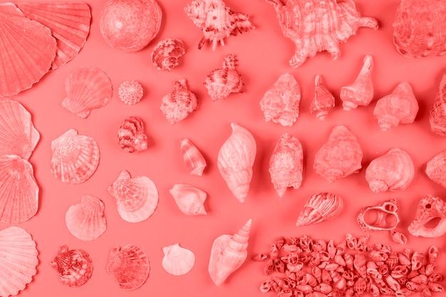 Surtido de conchas marinas en color coral contra fondo. Foto gratis