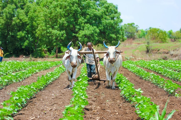 Técnica de cultivo indio Foto Premium