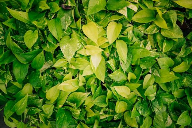 Telón de fondo de hojas verdes frescas Foto Premium