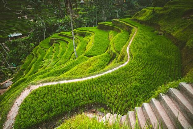 Terraza De Arroz De Tegalalang En Ubud Bali Foto Premium