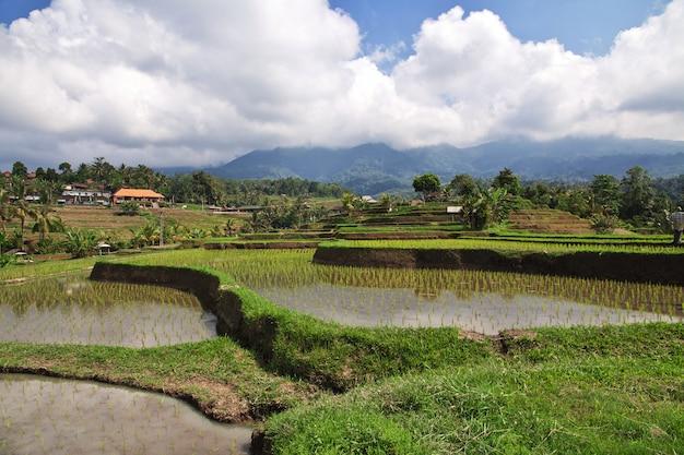 Las terrazas de arroz en bali, indonesia Foto Premium