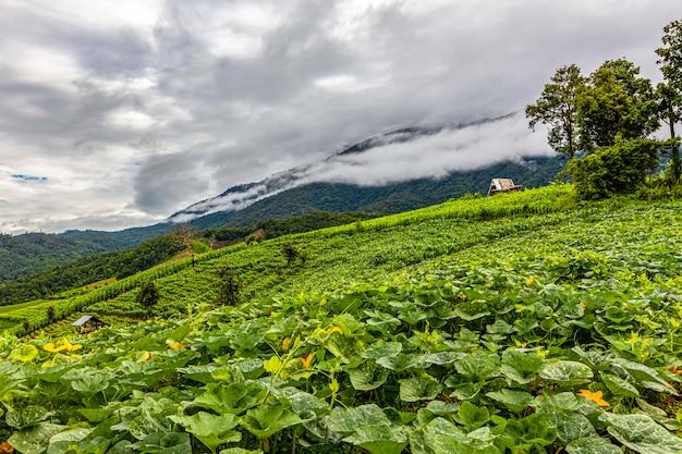 Terrazas de arroz de pa bong piang en la temporada de lluvias, chaingmai, tailandia Foto Premium