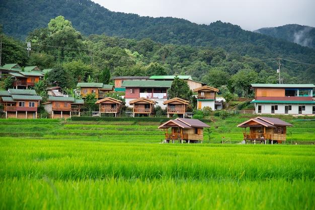 Terrazas De Campo De Arroz En Mae Klang Luang Homestay