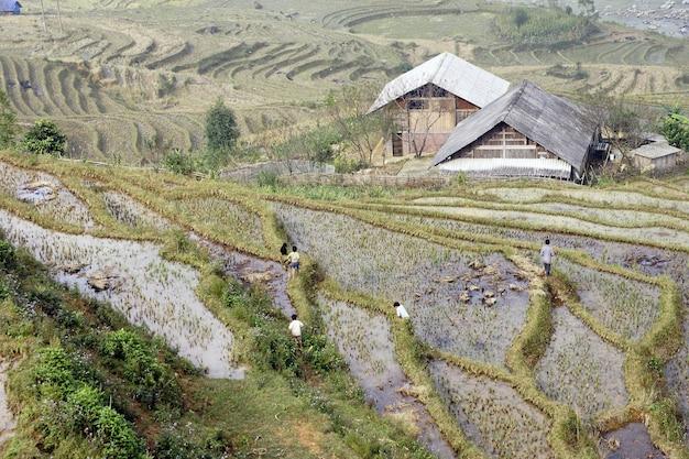 Terrazas Para El Cultivo De Arroz Irrigadas Por Los