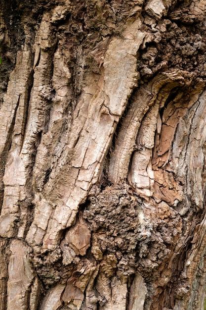 Textura de corteza de árbol | Foto Premium
