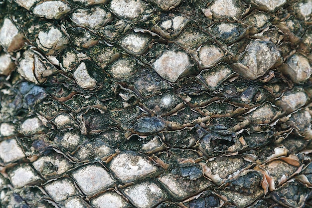 Textura de la corteza de palmera. hermoso patrón de corteza. de cerca. Foto Premium