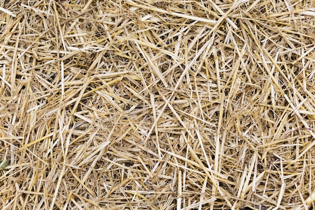 Textura de fondo de hierba de paja amarilla seca Foto gratis