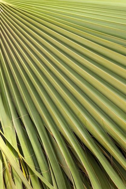Textura de hoja de palma verde Foto gratis