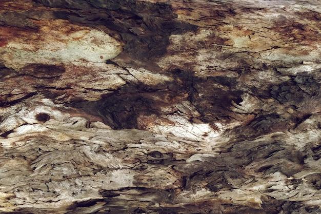 Textura de madera de árbol en detalle Foto gratis