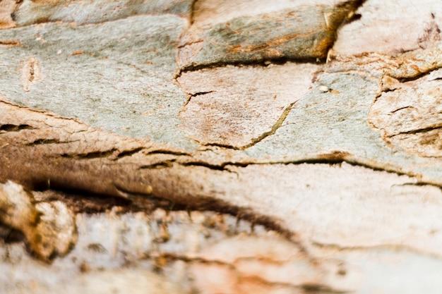 Textura de madera natural en la luz Foto gratis