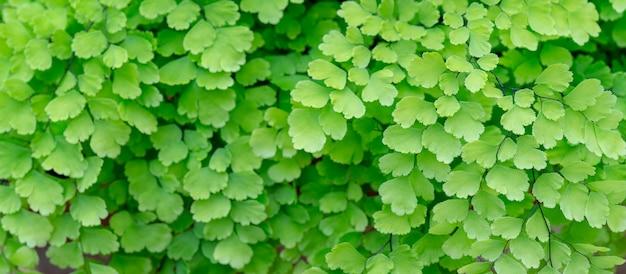 Textura de pequeñas hojas verdes. Foto Premium