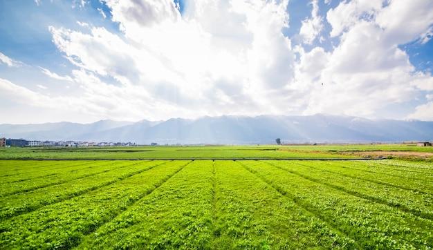 Tierras de cultivo Foto gratis