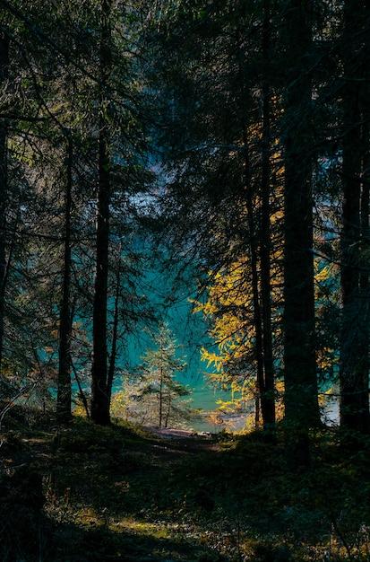 Tiro vertical de árboles amarillos y verdes en el bosque en un día soleado Foto gratis