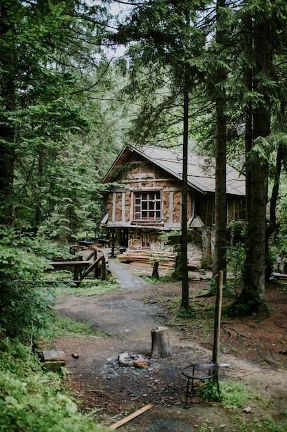Tiro vertical de una cabaña de madera en el bosque rodeado de altos árboles en un día soleado Foto gratis