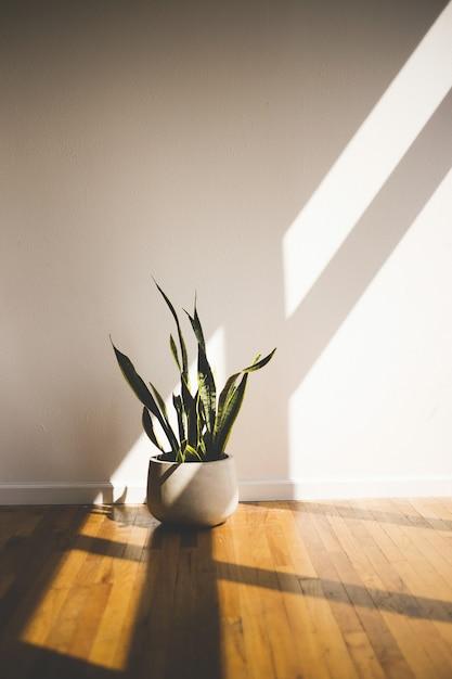 Tiro vertical de una planta verde de hojas largas en una maceta blanca dentro de una habitación. ideal para la decoración de una habitación. Foto gratis
