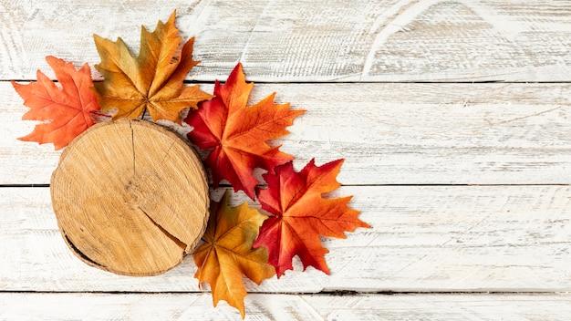 Tocón y hojas sobre fondo blanco de madera Foto gratis