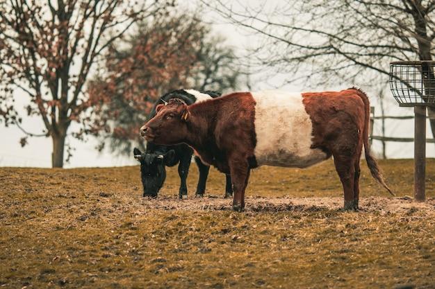 Toros en un campo rodeado de vegetación bajo la luz del sol Foto gratis