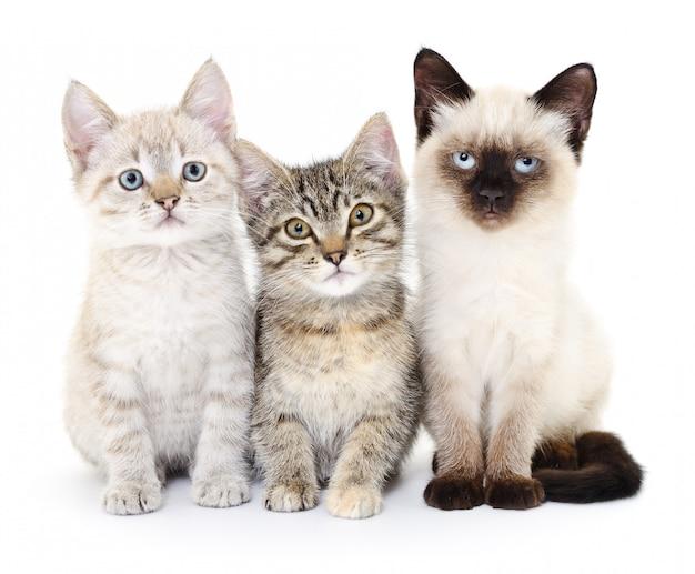 Tres pequeños gatitos Foto Premium